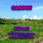 TANAH DIJUAL DI BALI 650 m2 di Canggu Batu Bolong