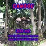 JUAL TANAH DI CANGGU 300 m2 view sawah di Kerobokan