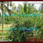 DIJUAL TANAH MURAH di UBUD Untuk INVESTASI TJUB489