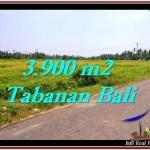 TANAH DIJUAL MURAH di TABANAN 39 Are di Tabanan Selemadeg