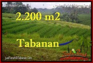 INVESTASI PROPERTY, JUAL TANAH MURAH di TABANAN BALI TJTB269