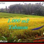 TANAH MURAH di TABANAN BALI Untuk INVESTASI TJTB273