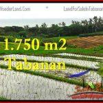 JUAL TANAH MURAH di TABANAN BALI 1,775 m2 View Laut, Sawah dan Gunung