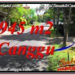 TANAH DIJUAL di CANGGU BALI 9.45 Are di Canggu Pererenan