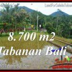 JUAL TANAH MURAH di TABANAN 87 Are di Tabanan Penebel