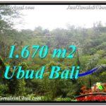 TANAH MURAH JUAL di UBUD BALI 1,670 m2 View Tebing